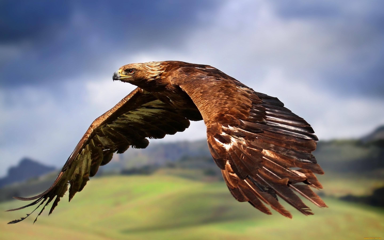 картинки на аву животных и птицы словно чистая